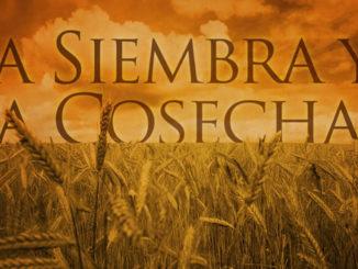 SIEMBRA Y COSECHA